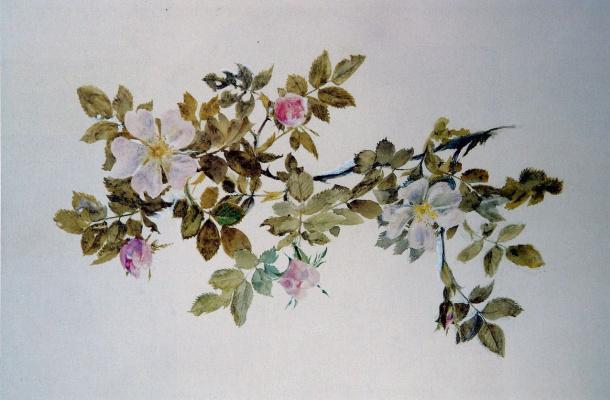 John Ruskin. Rosehip Sketch