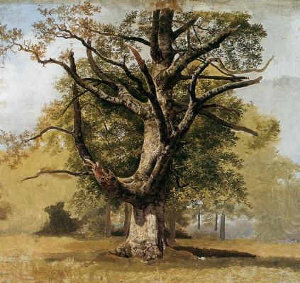 Баренд Корнелис Куккук. Дерево бук