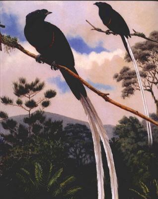 Валтер Вебер. Райские птицы