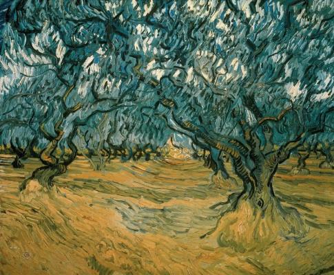 Винсент Ван Гог. Оливковая роща