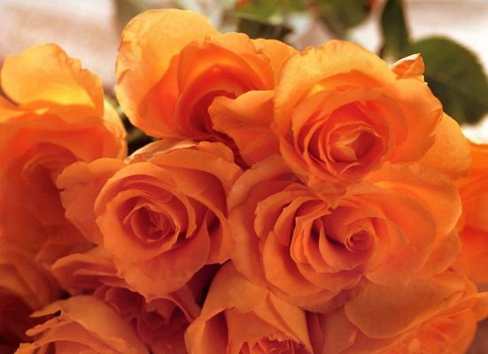 Мария Робледо. Оранжевые розы