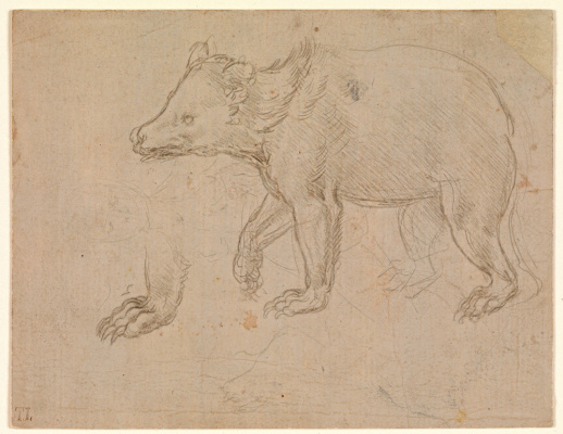 Leonardo da Vinci. The walk of a bear
