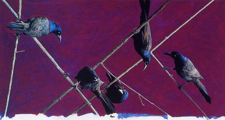 Марк Эберхард. Птицы