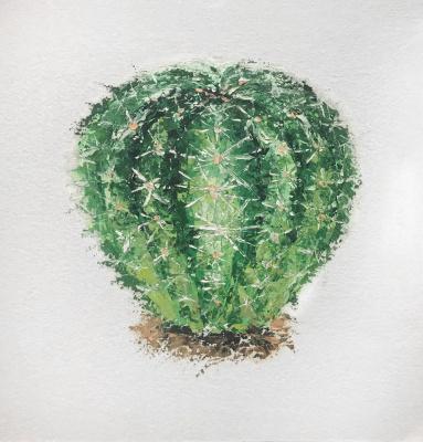 Anastasia Oraina. Cactus