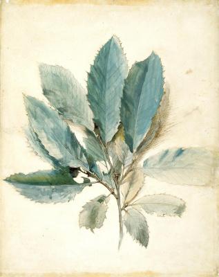 John Ruskin. Chestnut branch