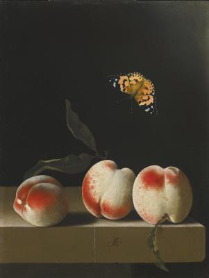 Адриан Коорт (Коорте). Бабочка и три персика на каменной столешнице