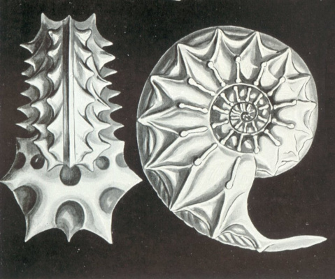 "Ernst Heinrich Haeckel. Ammonite Schloenbach. ""The beauty of form in nature"""