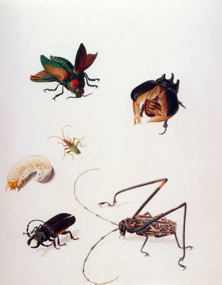 Maria Sibylla Merian. Insects