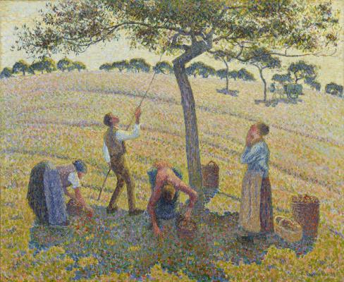 Сбор яблок в Эраньи