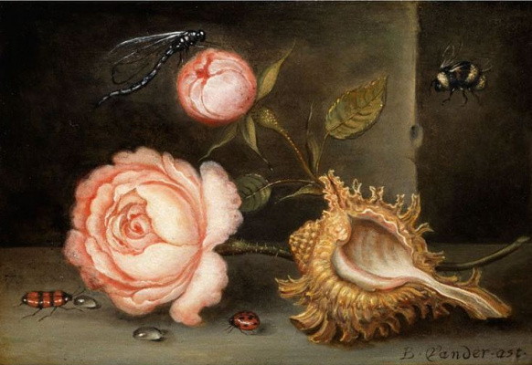 Baltazar van der Ast. Still life with rose, shell and insects