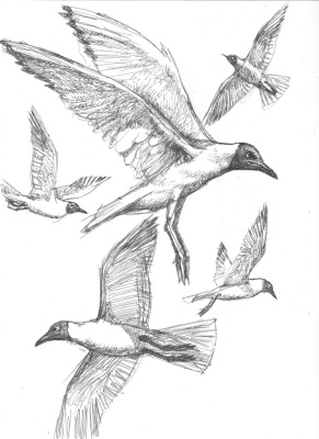 Александр Викторович Беляков. Black-headed gulls. From the series Birds.