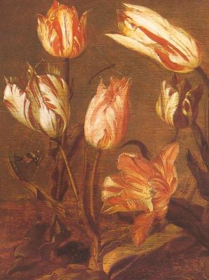 Jakob Gerrits Cape. Flowers