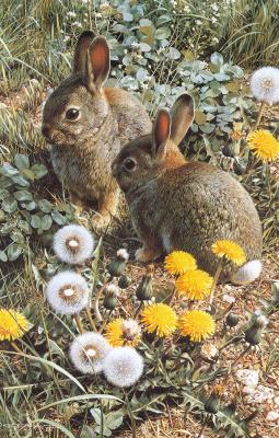 Карл Брендерс. Кролики
