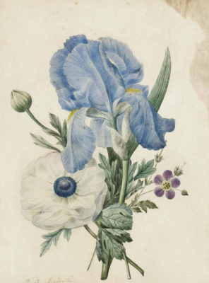 Pierre-Joseph Redoute. Bouquet: iris, geranium and white poppy