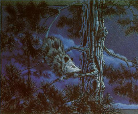 Кристофер Каньон. Ночь в лесу