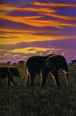 Уильям Шиммель. Слоны