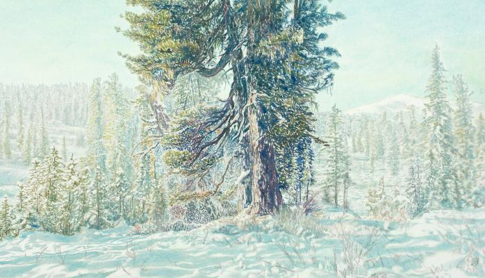 Виктор Михайлович Бородин. Cedar