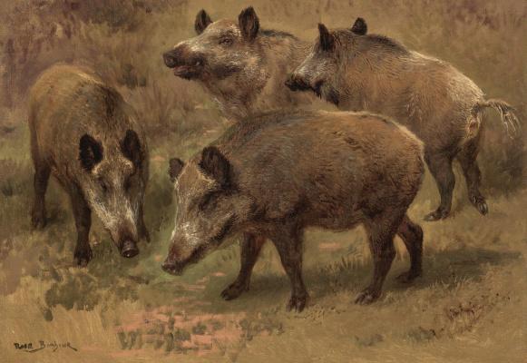 Rose Bonhur. Four boar in a landscape