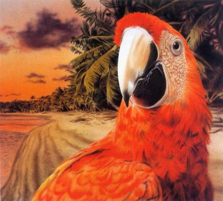 Таня Кимч. Попугай