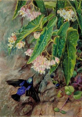 Марианна Норт. Бразильские цветы. Птица и бегония