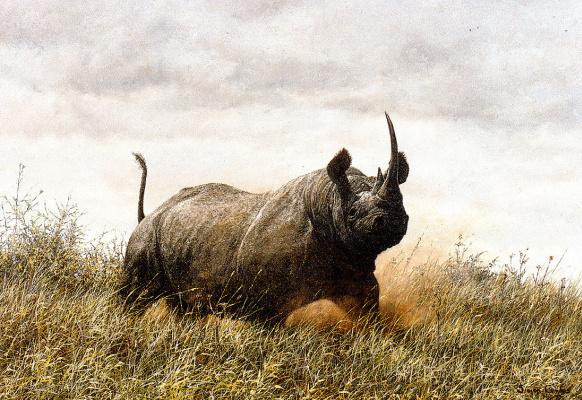 Саймон Комб. Носорог