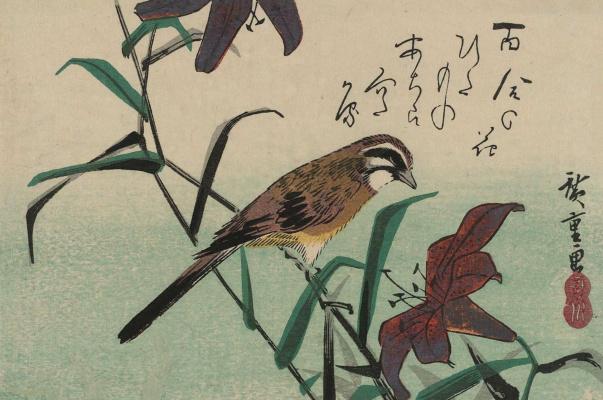 """Утагава Хиросигэ. Овсянка и лилия. Серия """"Птицы и цветы"""""""