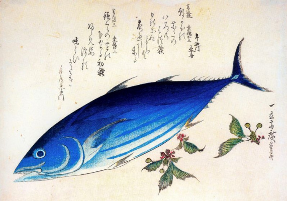 "Utagawa Hiroshige. Tuna and sprigs of cherry. A Series Of ""Fish"""