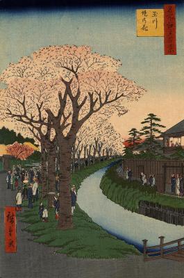 """Утагава Хиросигэ. Цветущие вишневые деревья на берегу реки Тамагава. Серия """"100 знаменитых видов Эдо"""""""