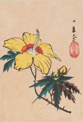 Утагава Хиросигэ. Желтый гибискус