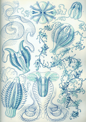 """Ernst Heinrich Haeckel. Combs """"The beauty of form in nature"""""""