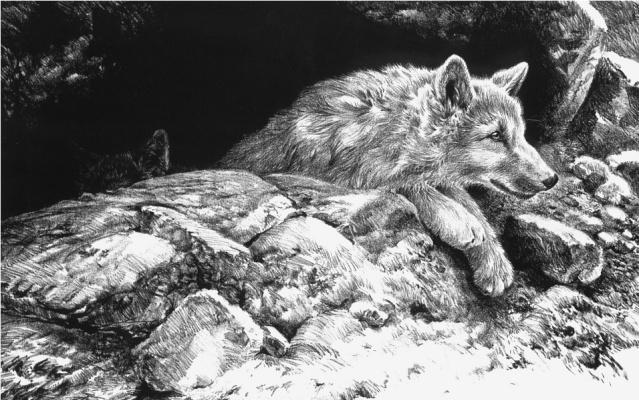 Джон Сирей-Лестер. Щенки арктического волка