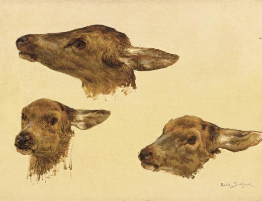 Роза Бонёр. Голова оленя. Три эскиза