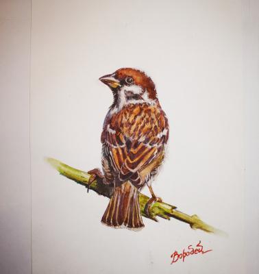 Veronica Oparina. Sparrow