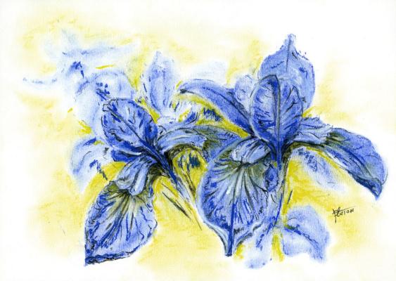 Platon Nikolayevich Starodubov. Irises