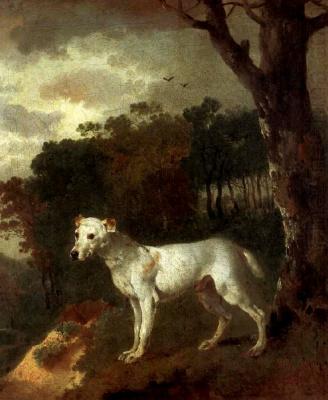 Bull Terrier in a landscape
