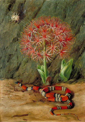Marianna North. Imperial Flower, Coral Snake and Spider, Brazil