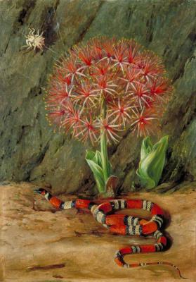 Марианна Норт. Цветок империала, коралловая змея и паук, Бразилия