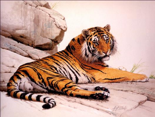 Гай Кохелич. Тигр