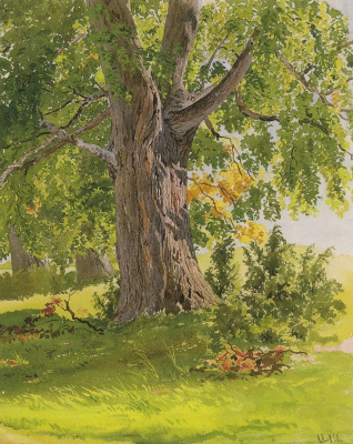 Ivan Ivanovich Shishkin. Oak, lit by the sun