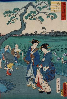 """Utagawa Kunisada. Fields of blooming irises. Series """"Pride of Edo: 36 best scenery"""""""