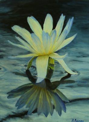 Andrew Lumez. Lily