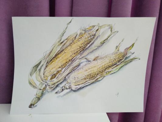Polina Komkova. Still life with corn