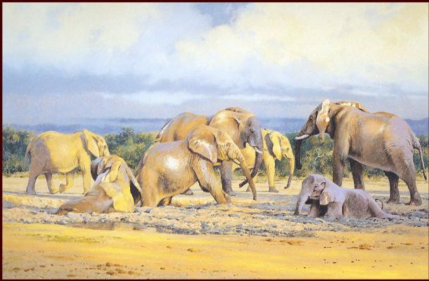 Слон Альдо. Грязевые ванны