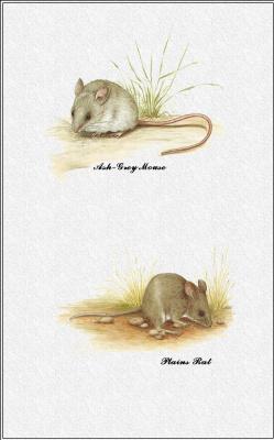 Марион Уэстмакотт. Австралийские млекопитающие 74