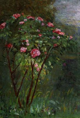 Gustave Caillebotte. Rose Bush in bloom