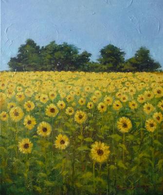 Olga Glazacheva. Sunflower field