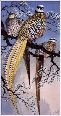 Чарльз Танниклифф. Пестрые китайские фазаны