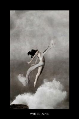 Оана Камбреа. Белый голубь