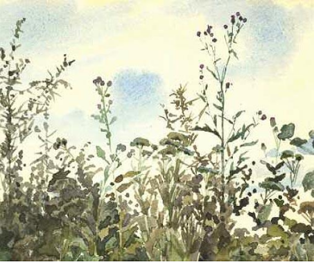 Elena Dmitrievna Polenova. Tatarnik against the blue sky. Olshanka