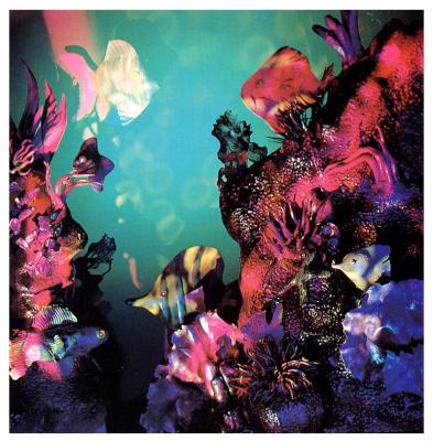 Кетлин Циглер. Подводный мир